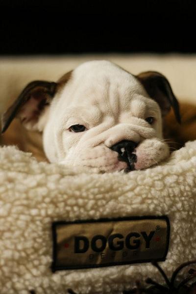 miejsce do spania dla psa