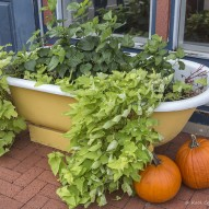 Jak tanimi sposobami odświeżyć wygląd ogrodu?
