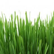 Jak dbać o trawnik wiosną i latem?
