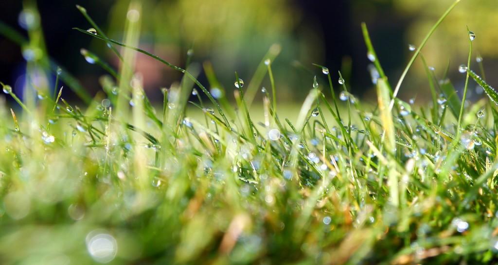 grass-498628_1280
