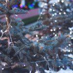 pexels-photo-30364-1
