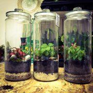 Rośliny doniczkowe dla początkujących – jakie wybrać?